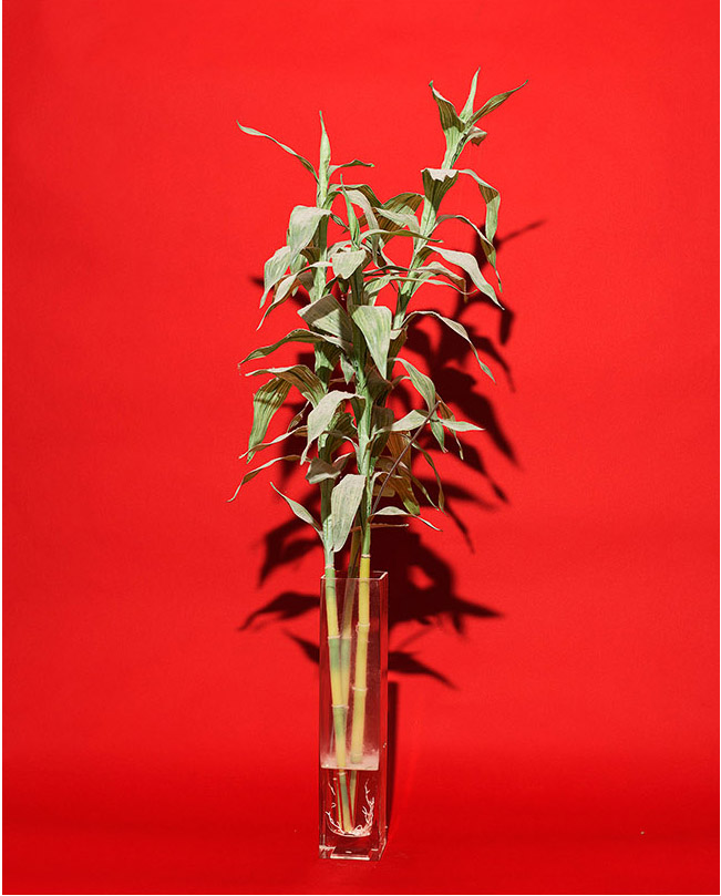 Her_Bamboo