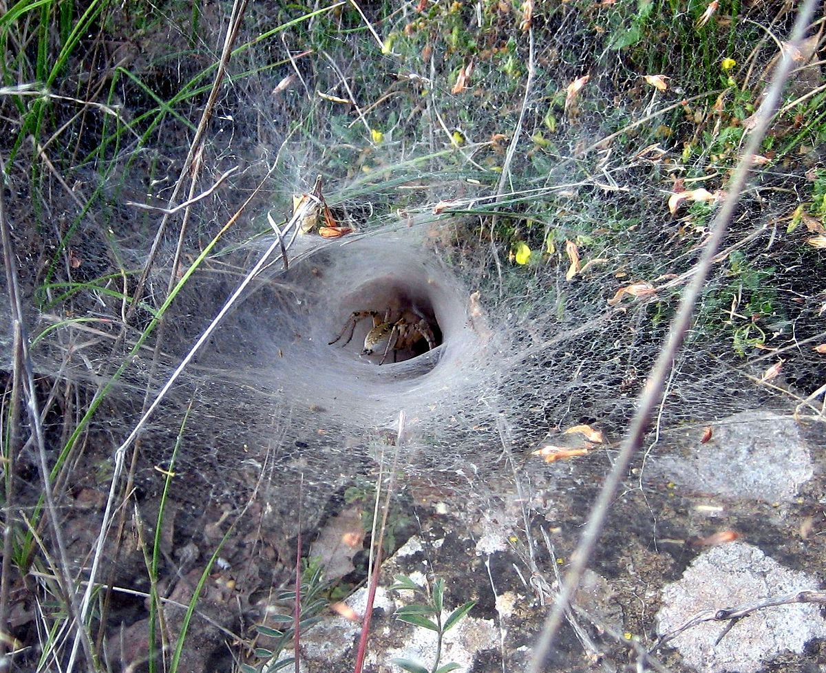 1200px-Spider_web_Teruel
