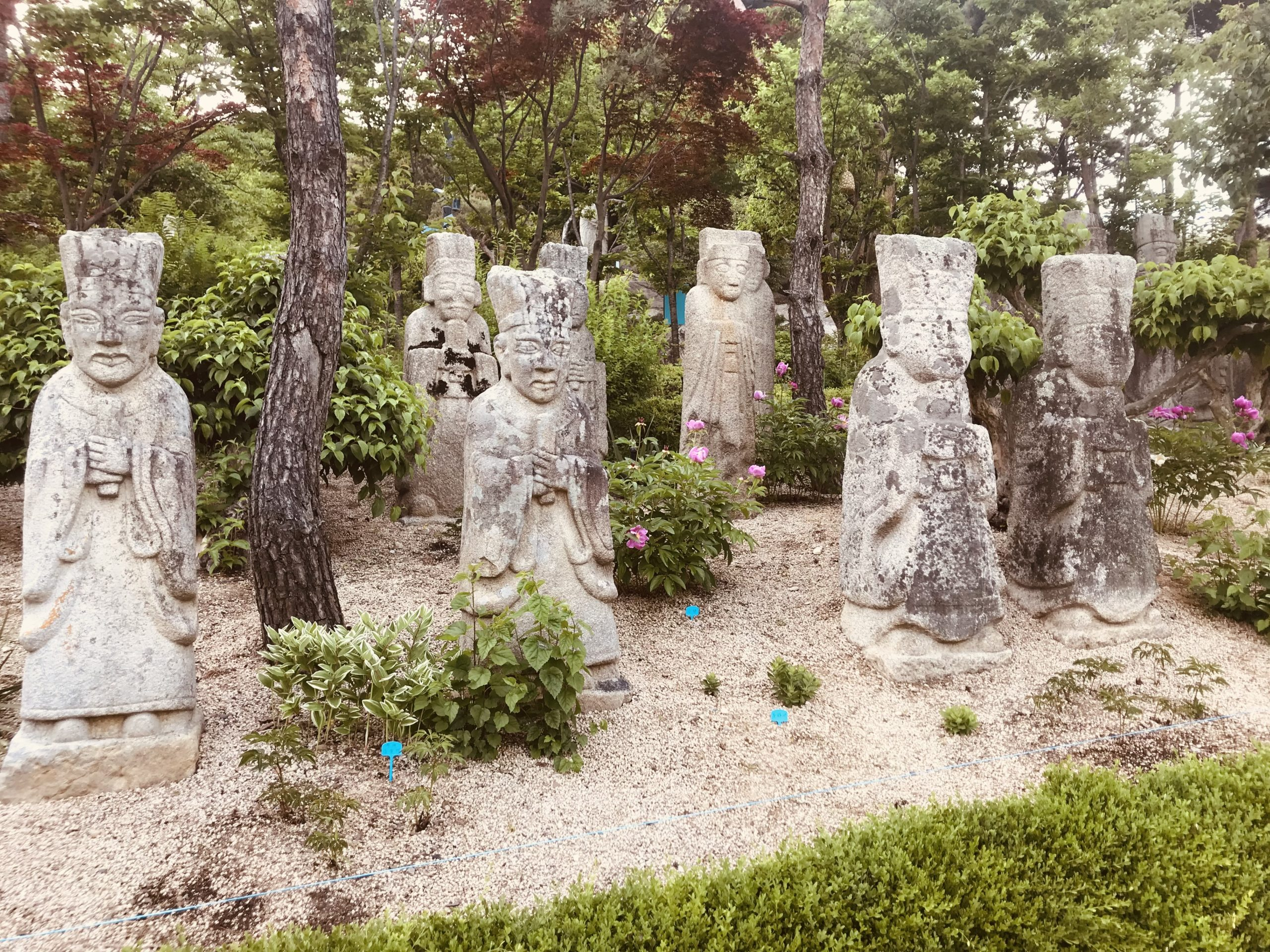 Korean stone sculptures from the Joseon Dynasty, in an outdoor exhibit at the Korean Stone Art Museum. Eight light stone sculptures, in the form of human figures with hands clasped, stand in a grove of gravel, bushes, and trees.