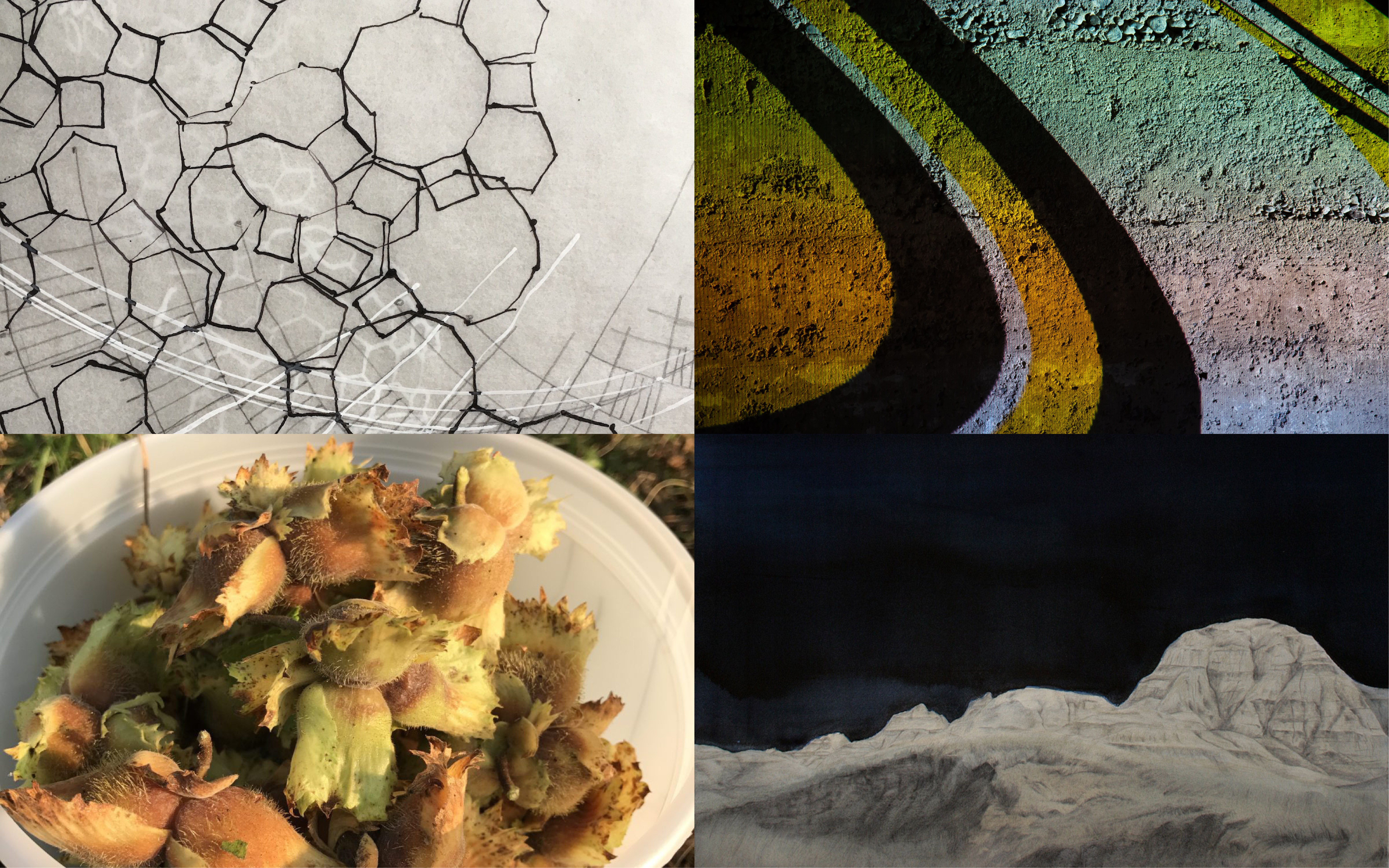 Composite image in four quadrants, with drawings of organic forms, landscape, and photo of plants.