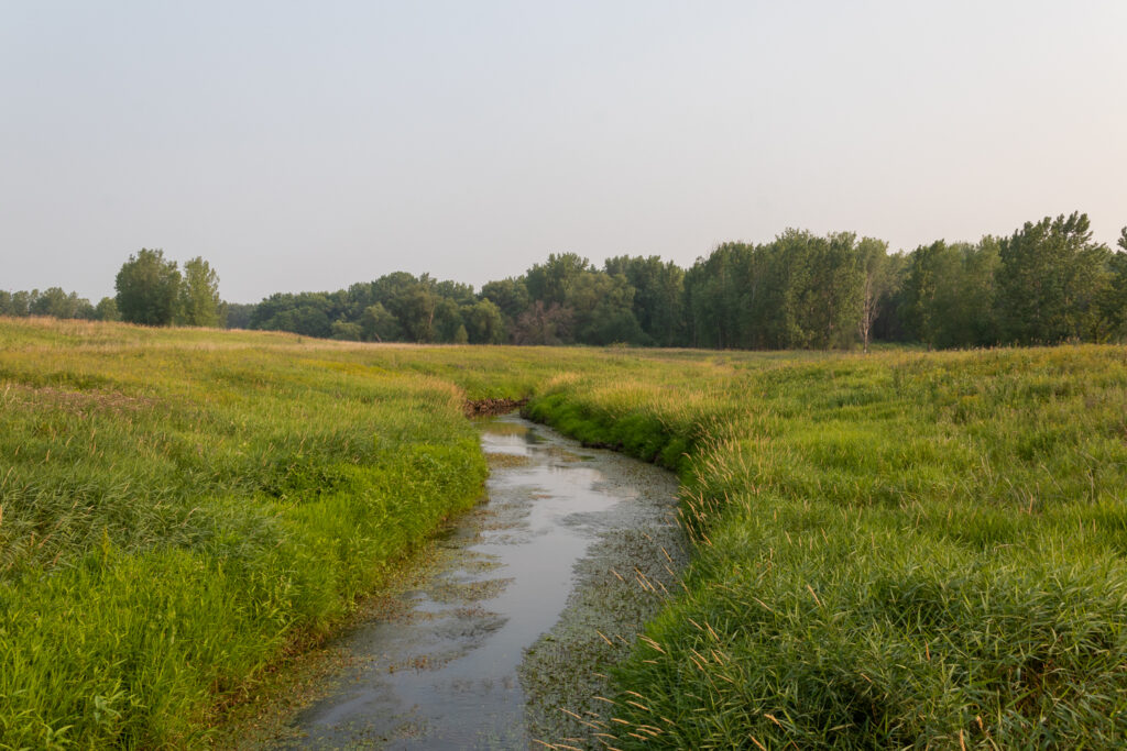 Creek with green grasses on either side, and low grove of trees in background against clear sky.