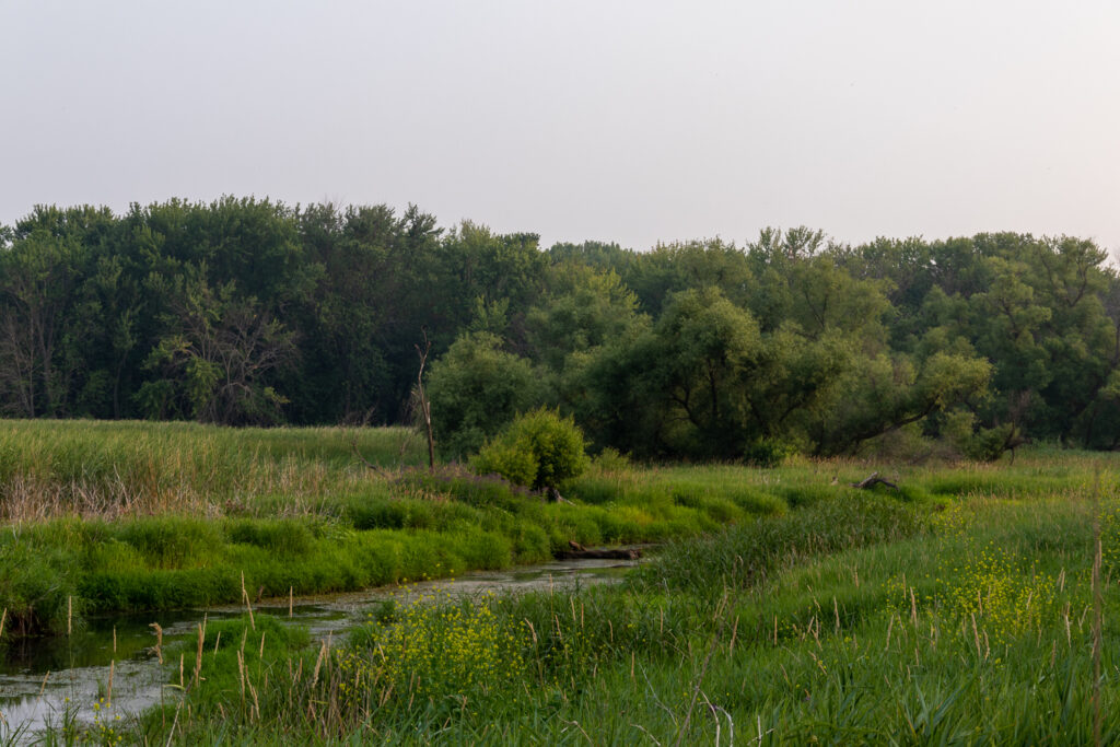 Creek crosses through green grasses, with stand of green trees in background.